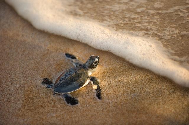 动物兄弟海龟船图片